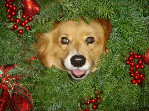 2009 christmas doggies 007